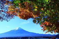 30年11月の富士(17)河口湖の紅葉と富士 - 富士への散歩道 ~撮影記~