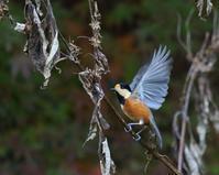 秋の恵みは、 - ぶらり探鳥