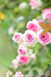 ツル ミミエデン - 花の手帖 - 植物図鑑(blog版)