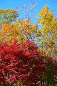 落ち葉の散歩道 - 写真撮り隊の今日の一枚2