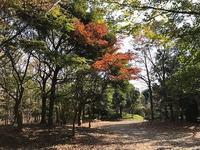 長久保緑化公園②果樹園&ハーブ園 - つれづれ日記