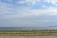 大根のラインダンス☆三浦の浜辺 - 素顔のままで