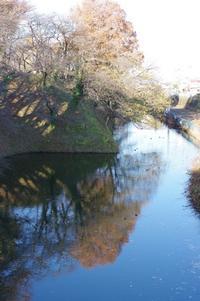 霞城公園ネコ歩き - 川の流れのカンツカブログ