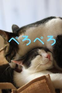 にゃんこ劇場「ペロペロ作戦!」 - ゆきなそう  猫とガーデニングの日記