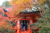 紅葉関西帰省 - 1 - - うろ子とカメラ。