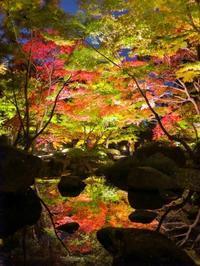 2018.11.26紅葉リフレクション(太田黒公園) - ダイヤモンド△△追っかけ記録