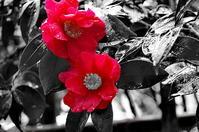 嵯峨野赤の印象 - 風の香に誘われて 風景のふぉと缶