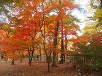 今年の森林公園の紅葉 - Zen おりおりの記