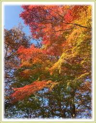 高尾山の紅葉 - ひびのこと