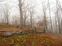 先週の採り置きナメちゃん求めて茸採山PartⅧ【奈良】11/17 - 静かなお山の森歩き~♪