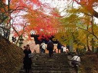 秋月城跡「黒門」の紅葉を見ました。 - 風にのって・・・