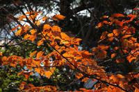 秋の京都行きたいなぁ。 - 小豆島PHOTOGRAPH(ココロで感じる写真・ココロの目を開眼!)