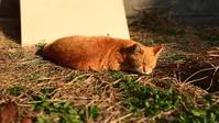 【地域ねこさん】もうすぐ暖かい春だよ - SAMのLIFEキャンプブログ Doors , In & Out !