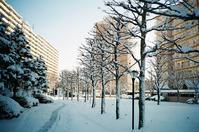 融けてしまったマンションの初雪 - 照片画廊