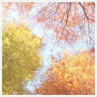 秋の三色丼  。°* - かめらと一緒*