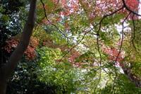 紅葉 - エンジェルの画日記・音楽の散歩道