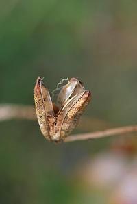 11/26初冬の庭にツグミ見つける - 「あなたに似た花。」