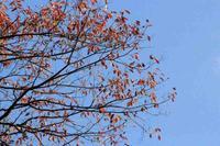 枯れ葉 - 「 ボ ♪ ボ ♪ 僕らは釣れない中年団 ♪ 」