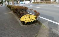 町なかでは・・・ - 【出逢いの花々】