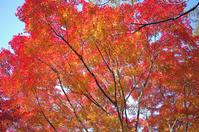 昭和記念公園紅葉1 - 生きる。撮る。