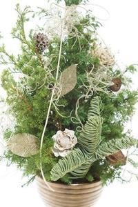 今年はクリスマスツリーが大人気! - お花に囲まれて
