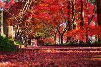 奥山に紅葉踏み分け・・・日本には紅葉がある♪「金蔵院」三度目の正直(^^; - 『私のデジタル写真眼』