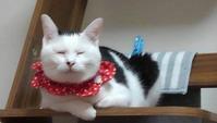 猫バンバンしよう - 素人木工雑貨と犬猫日記