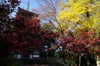 11月28日本土寺 - てしやから君の撮影日記