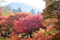 奈良公園散策 - 峰さんの山あるき