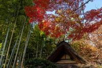 鳩林荘の紅葉 - 彩りの軌跡