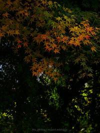 フラットな光でも - M2_pictlog