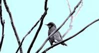 百合が原公園の鳥を写しました。(2018年11月27日) - ワイン好きの料理おたく 雑記帳