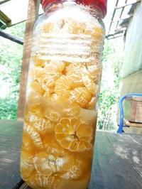 島ミカンの酵素ジュース - チルチルCafe&野遊び
