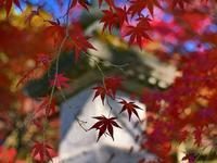 紅葉が織り成す錦秋モザイク!・・・色彩の異次元「金蔵院」絶景♪ - 『私のデジタル写真眼』