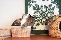 ぎゅうぎゅうで落ち着く猫と落ち着かない猫 - きょうだい猫と仲良し暮らし