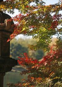 今日の六義園紅葉で人がわんさか。なんと会員Mさんに遭遇。 - みるはな写真くらぶ