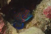 18.11.29ヤドカリ・オンリーダイブ - 沖縄本島 島んちゅガイドの『ダイビング日誌』