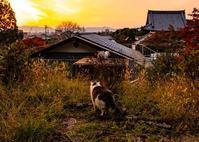 永観堂・南禅寺・高台寺の紅葉 ③ - 写真の散歩道