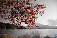 河口湖畔紅の印象 - 風の香に誘われて 風景のふぉと缶