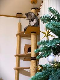 クリスマスっぽい写真 - にゃんず日記