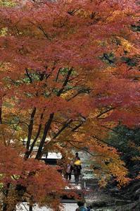 ~紅葉と黒鷺~ - My  Photo  Life