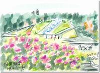 須磨離宮公園、秋の薔薇が見頃(2)+見事な紅葉 - デジの目
