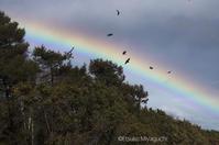 虹舞鳥 - ekkoの --- four seasons --- 北海道
