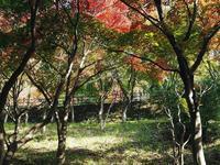 織姫公園のもみじ谷 - 光の音色を聞きながら Ⅳ