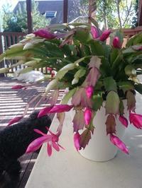 咲いていました - 差萌土建 山の上営業所