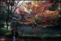 六義園-24 - Camellia-shige Gallery 2