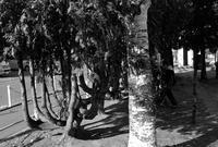 患って知る樹木の強靭さ - 照片画廊