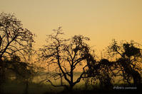 霧の出た朝焼け - BobのCamera
