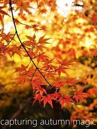 紅葉が、美しすぎて… - serendipity blog