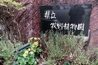 藤田八束の高知旅行@高知県率牧野植物園を見学、植物学者牧野富太郎先生の業績に魅せられて、ノジギク名付け親 - 藤田八束の日記
